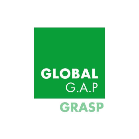 Insalatine certificate GLOBAL GAP e GRASP